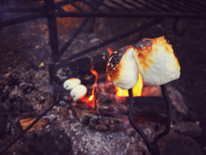 Marshmallows grilled in the campfire, sooo good